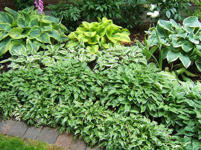 OHS Garden Tour 2010 & July Picnic