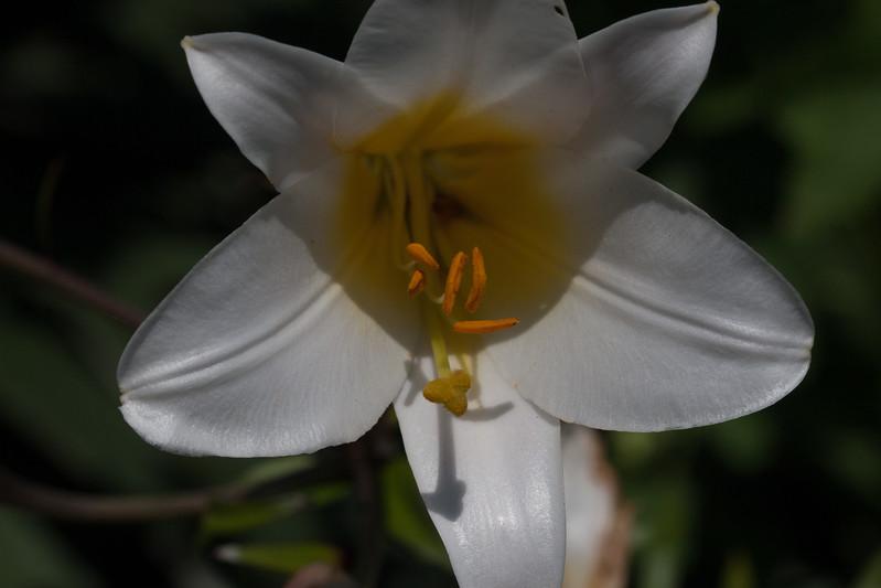 2009 06 30_NY Botanical Gardens_0665.jpg