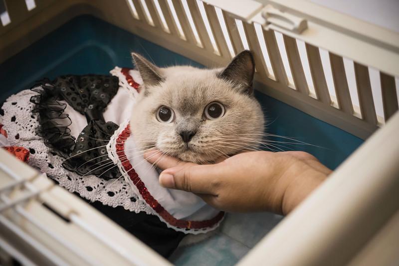 VividSnaps-The-Seletar-Mall-CAT-Dress-Up-Contest-105.jpg