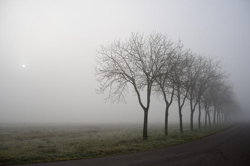 Foggy Sunrise - Near Castelfranco Emilia, Modena, Italy - January 7, 2013
