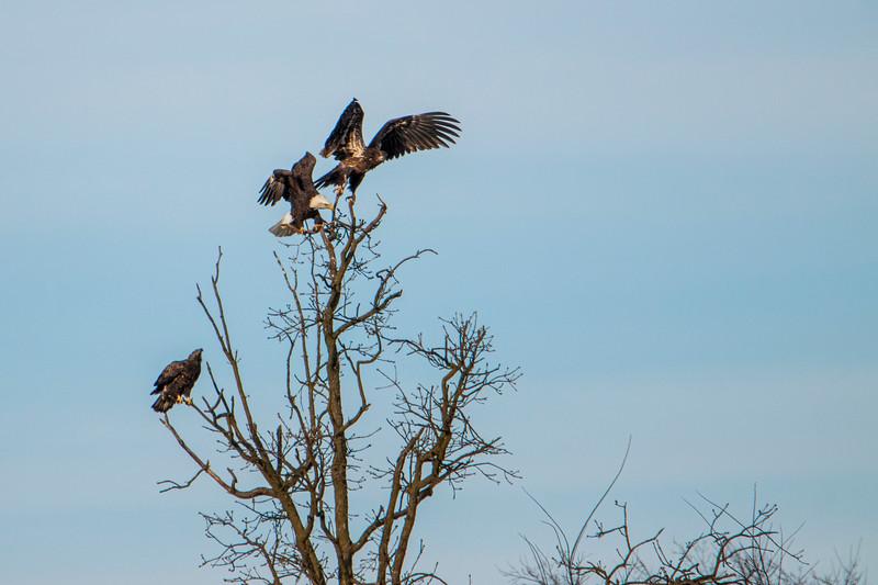 12.26.20 - Kings River Eagles.