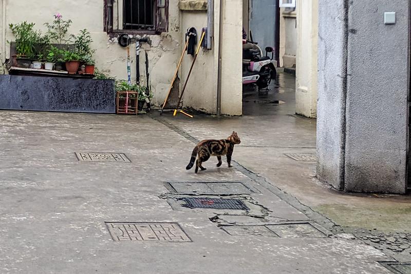 Very skittish friendcat. Has a great bullseye pattern.