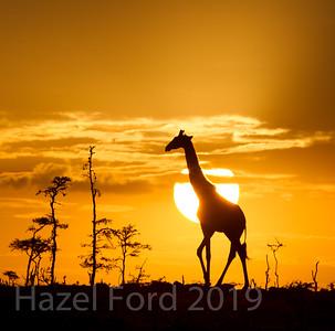 Kenya August 2019