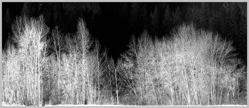 Yosemite Winter Grove.jpg