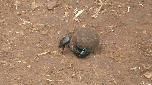 East Africa: December 2010