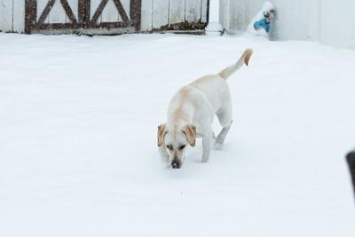 First Snow Nov 15th 2018