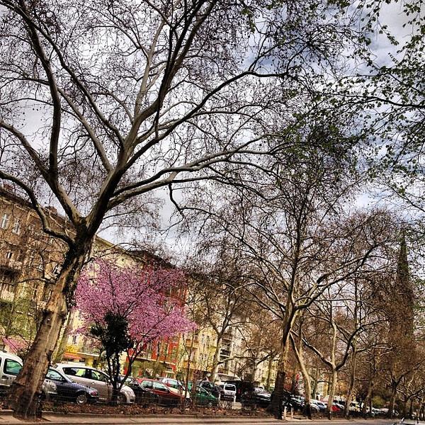 Taking a visual break, looking up. Sky of trees, streets of Berlin