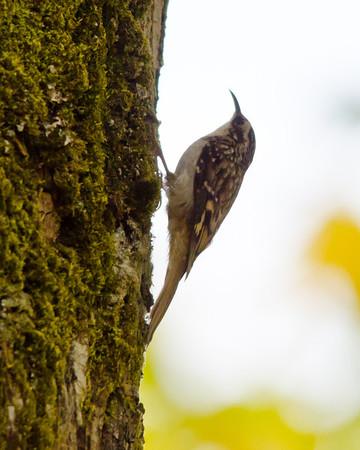 October 2012 (13 species)