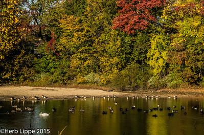 Autumn Studies 10-23-2015