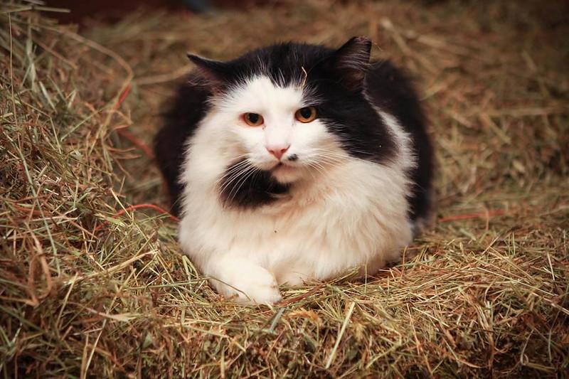 Fred- barn cat 1.jpg