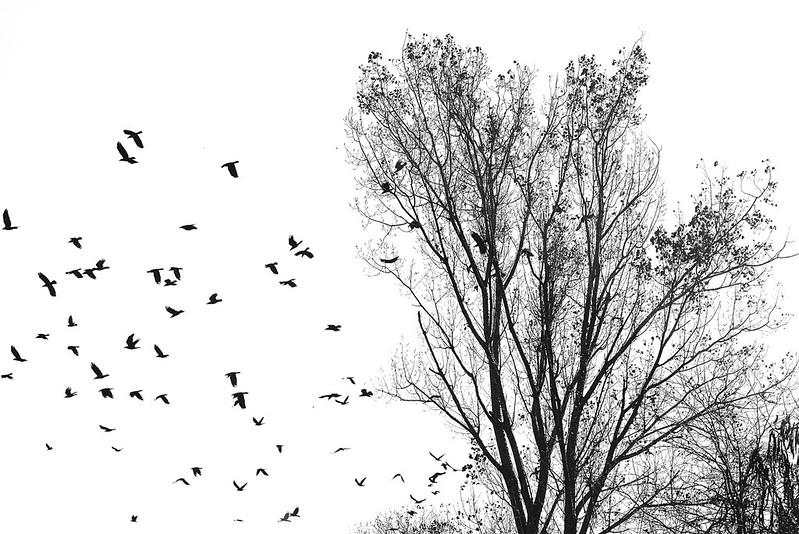 Nature Black and White