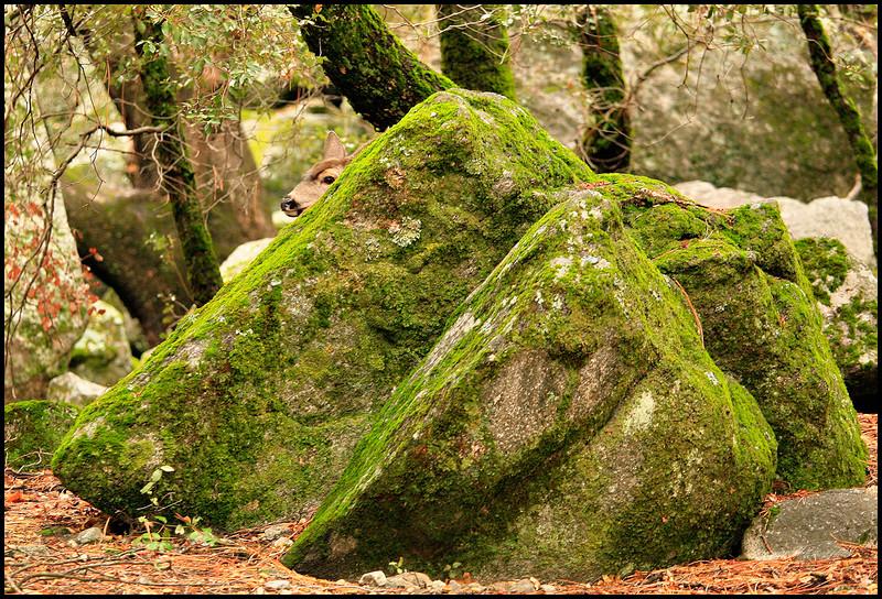 Hidden Nature.jpg