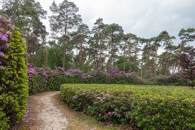 Rhododendronwandeling