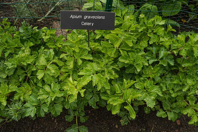 Arboretum, July Harvest-48.JPG
