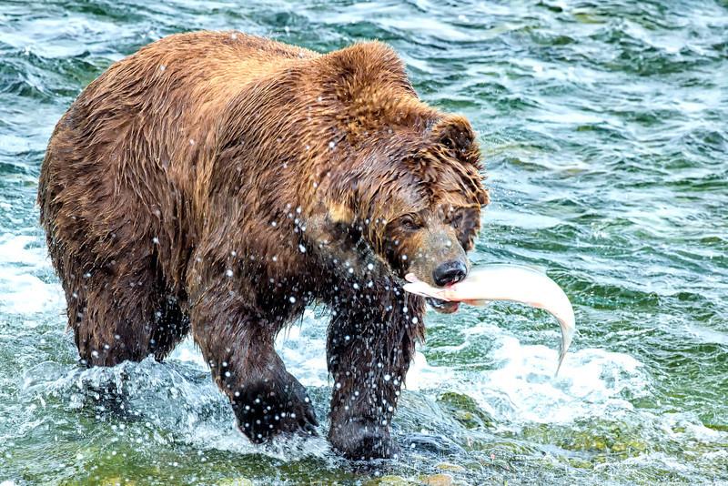 Alaska_2013_FH0T7712.jpg