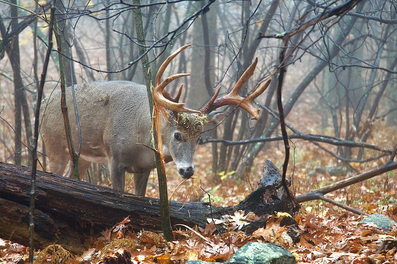 Whitetails in the Wild IMP - 1 (14).jpg