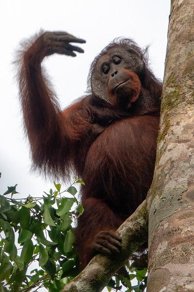 Danum Valley Borneo Rainforest Lodge 5-11-18134299.jpg