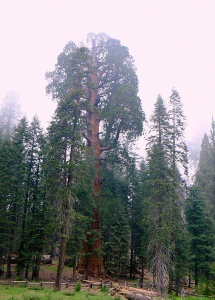 California Day 6 Sequoia 05-30-2017 88.JPG