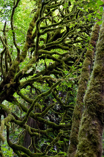 Avenue of the Giants, Redwoods Photo Trip