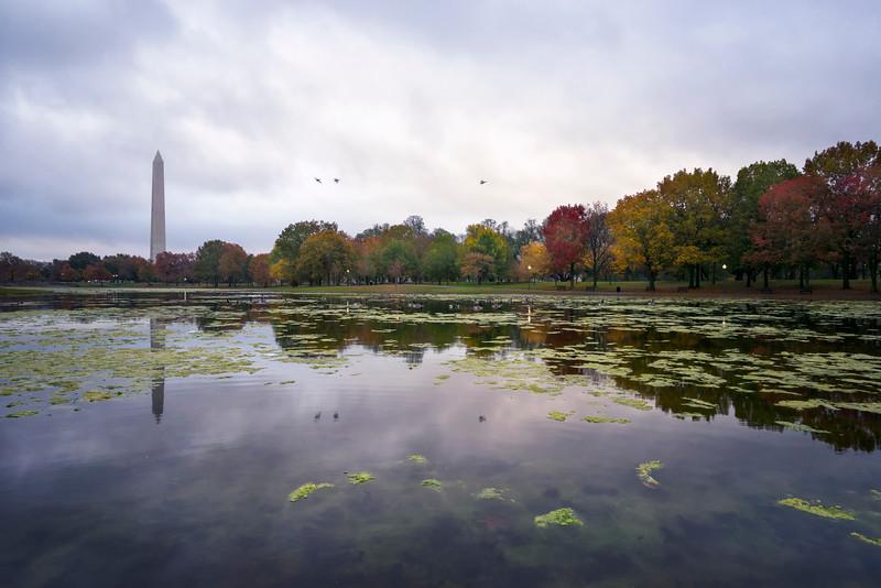 constitution-gardens-autumn.jpg