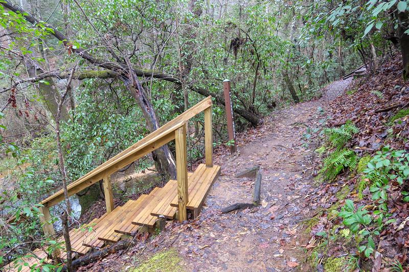 Laurel Trail @ Shank's Creek Boardwalk Spur