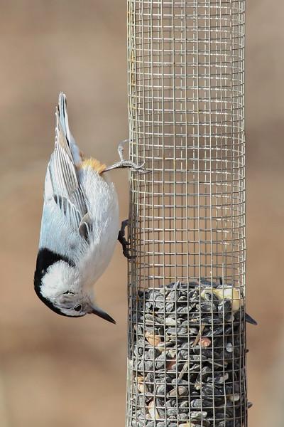 Birds-102-2.jpg