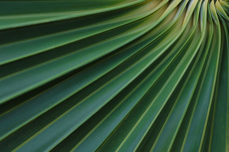 Palm 2, Blue Mountain Beach, Florida, 2016