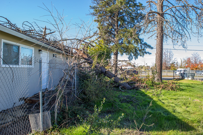 5671 Wallace Ave - Tree 1030am 12 16 2017 Extremly Windy Conditions-15.jpg