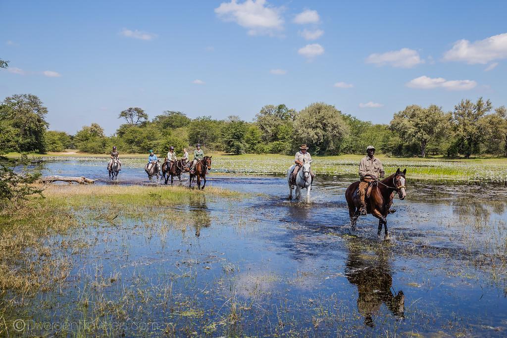 Zimbabwe Horse Safari - Lina Stock