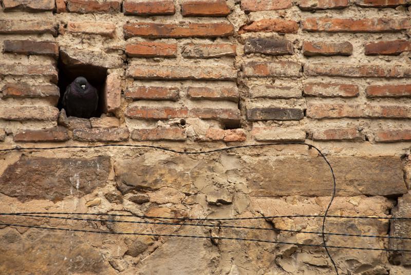 Bogota 513.jpg