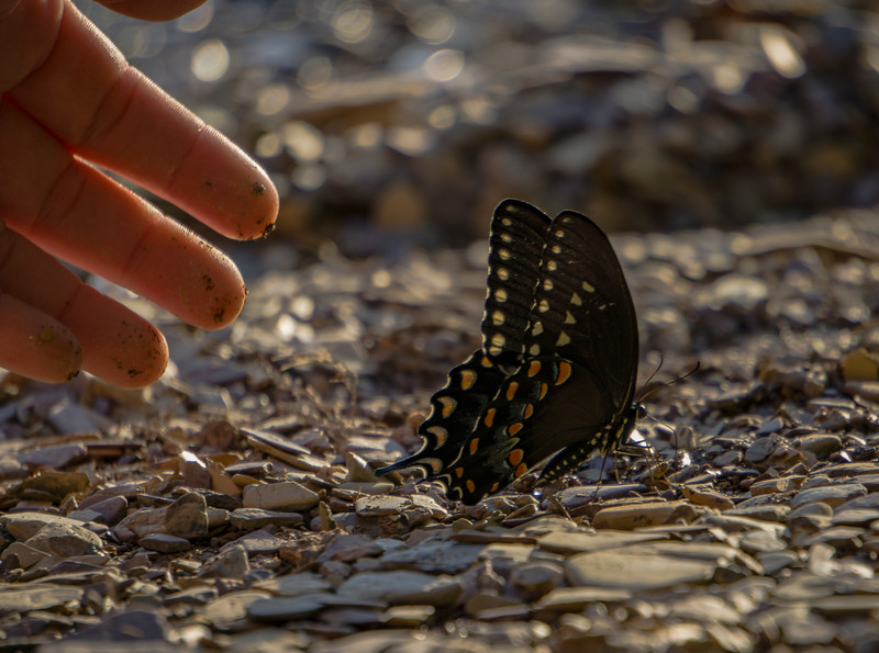 butterfly and hand (p).jpg