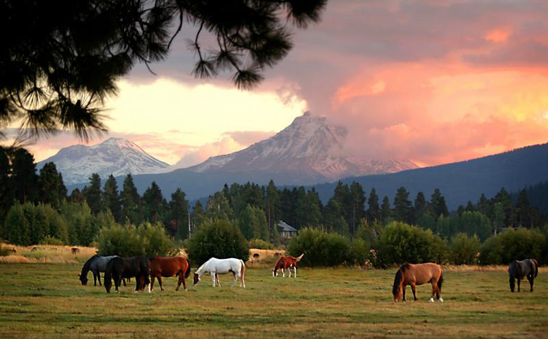 horses sunset 8X12 092106 MASTER 080306_8313.jpg