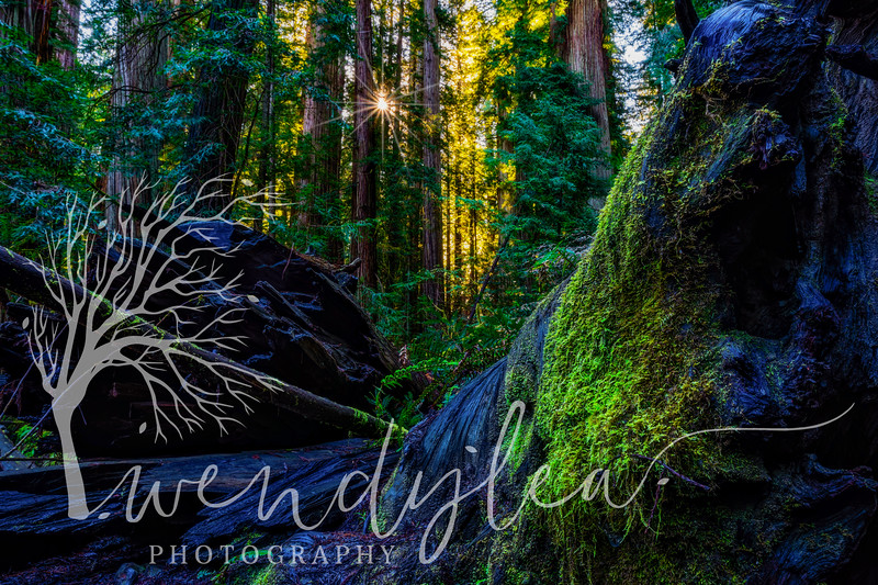 wlc Oregon Coast 032019 5352019-Edit.jpg