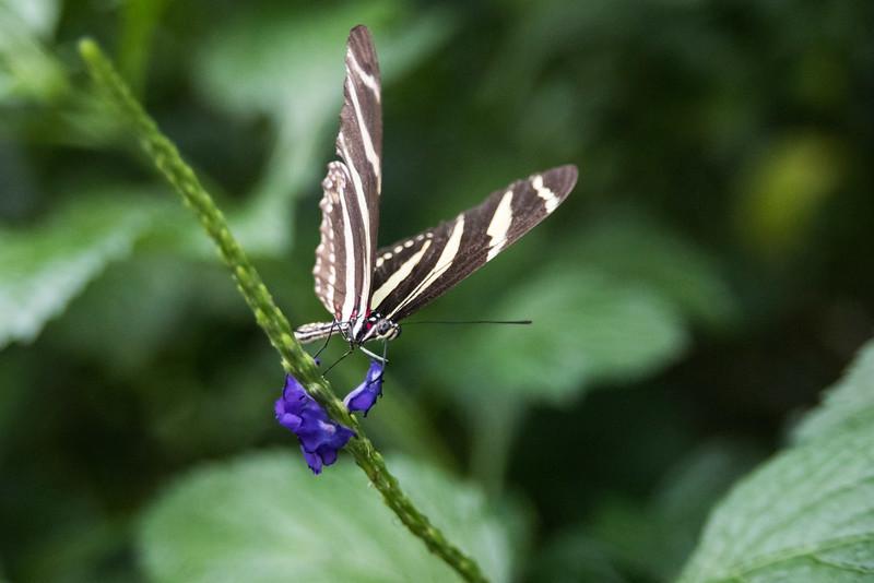 butterfly-274.jpg