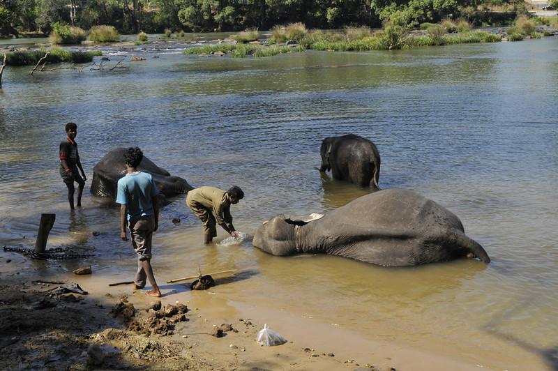 Elephants and Tibetan Village