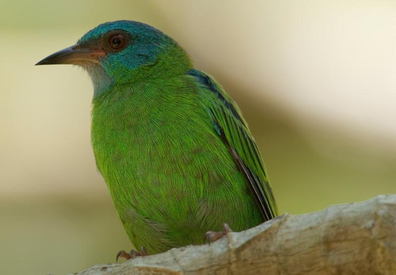 bird3482.jpg