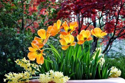 Lindy's Butterflies & flowers
