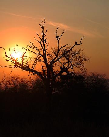 Kruger - Day 6 - Oct 18
