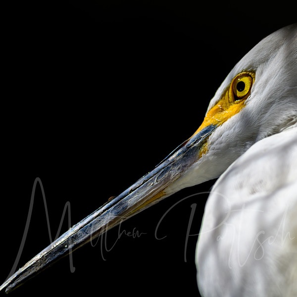 Going bird photographing today.  Here is a friendly bird at aquarium of the pacific.