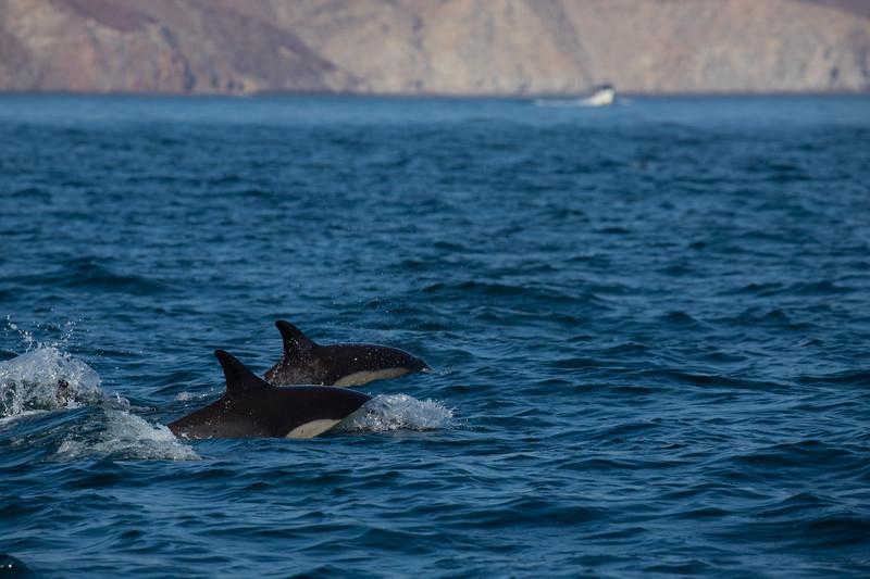 Baja-4593.jpg