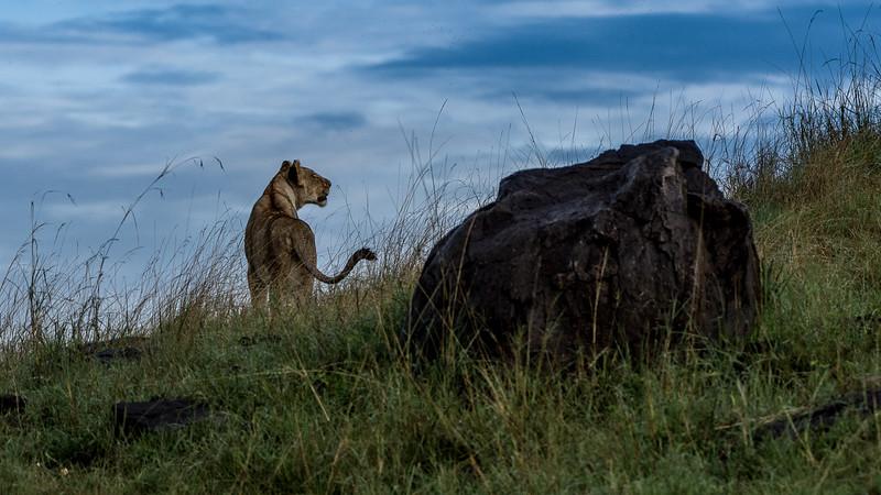Lions-0121.jpg