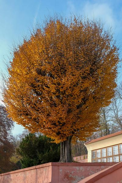 brevnov stromy-009.jpg