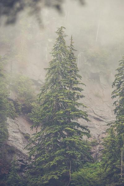 Mature forest on the edge of Statlu Lake, British Columbia, Canada.