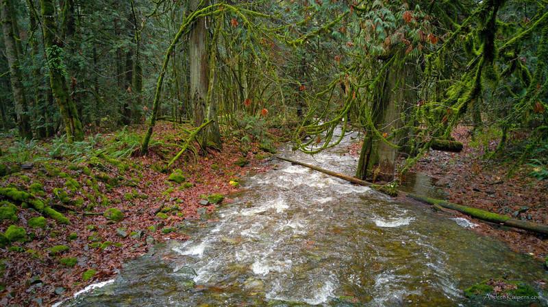 Salmon and Cedar: A Westcoast Day at Goldstream Provincial Park