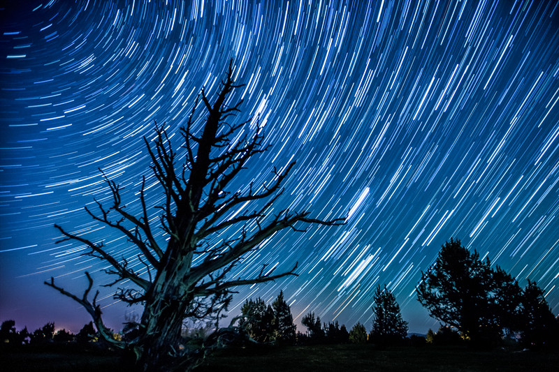 Ghost Tree, Star trails, OREGON