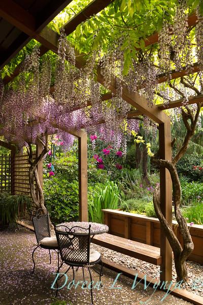 Wisteria floribunda Texas Purple_054AMG.jpg
