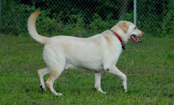2010-07-11 Denville Dog Park