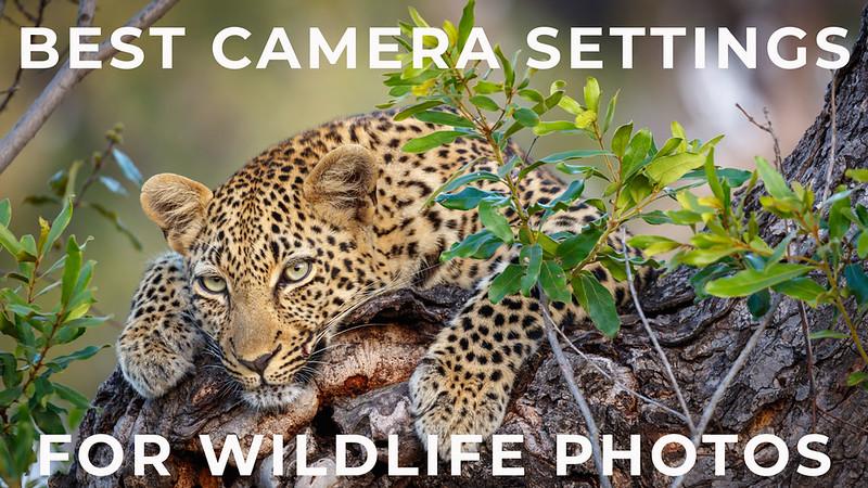 Basic Camera Settings for Wildlife Photography