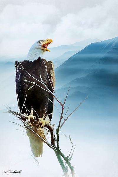 EaglestMtn-web1620x1080U50.jpg
