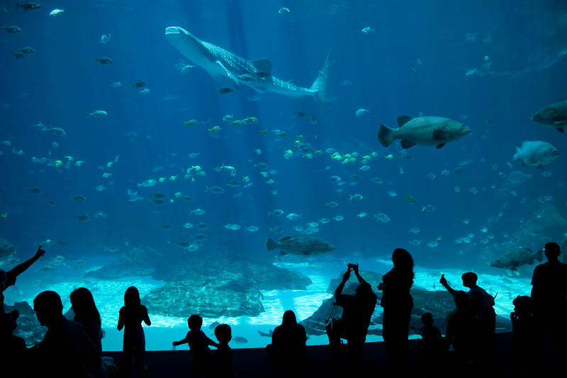 Atlanta Aquarium